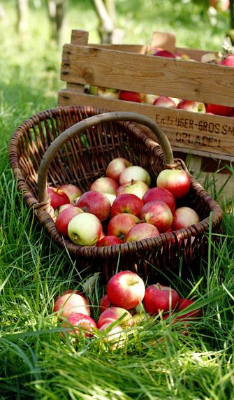 Konrad Gartenbaumschulen - Obst